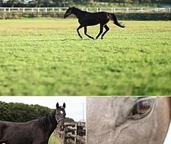 「Fukushima Horse」のひとコマ