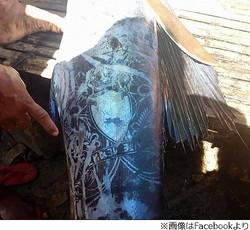 タトゥーのような謎の模様の魚