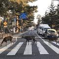 奈良で「鹿のビートルズ」激写される