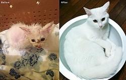 グレムリン状態のボロボロの子猫にタップリの愛情を注いでみた結果