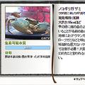 TOKIOの城島茂と山口達也が「DASH海岸」で「幻のカニ」を生け捕り
