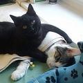 ポーランドの動物病院にいる看護する猫 世界中で感動のコメント