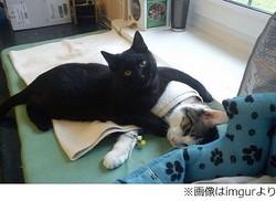 """動物に寄り添う看護師にゃんこ、多くの""""患者たち""""を優しくケア。"""