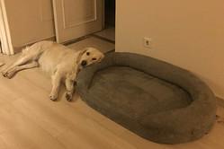 違う違う、そうじゃない…専用のベッドを間違って使っているワンコが面白い