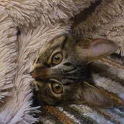 日本の定番じゃないの? 「タマ」という名前の猫、いまでは珍しい存在に