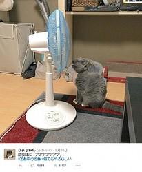 謎の夏の定番 扇風機に向かって「アアアアアアア」は猫でもやるらしい