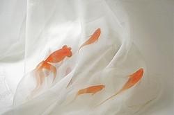 金魚が天を泳ぐ深堀隆介アート展 matohu表参道1周年記念開催