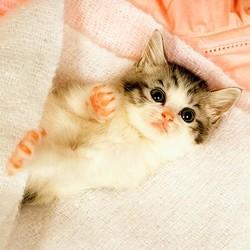 獣医師に聞いた!飼い猫は一人にされると寂しいの?
