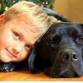 糖尿病アラート犬と過ごす7歳のルーク君(出典:http://www.insideedition.com)