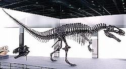 アクロカントサウルス・アトケンシスの骨格