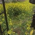 「好き勝手やる方は来ないで」一部の「撮り鉄」に真岡鉄道が苦言