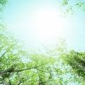妊娠を望む女性は日光を浴びるべき!?(画像はイメージです)