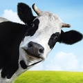牛の管理ツール?育ちの「見える化」が牛肉の流通を変える
