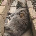 猫と友達になったシマリスがネットで話題「かわいすぎか」