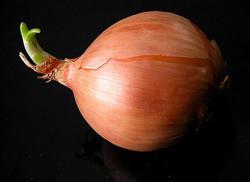 画像はイメージです 出典画像:liz west / onion (from Flickr, CC BY 2.0)