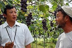 果樹園「フルーツランドよよぜん」での取材の様子