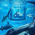 360度をサメ35匹に囲まれた水中部屋 Airbnbに登場