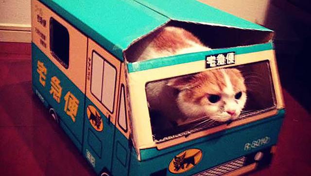 [画像] 【衝撃事実】猫は人間の気持ちを理解してる事が判明 / 猫を科学的に実験して判明した事7つ