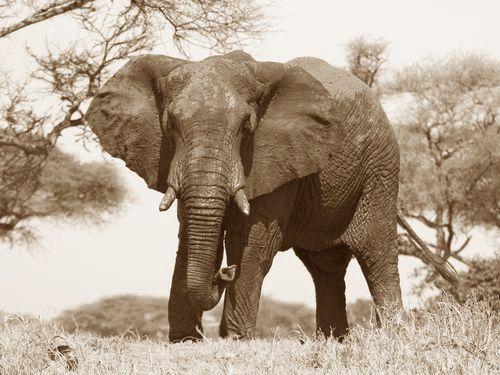 危なかった…アフリカゾウが怒るとこんなことになるんだ