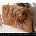 猫の剥製バッグに賛否両論(出典:http://www.bbc.com)