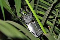 植木に潜む「メタルオオカブト」
