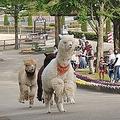 那須りんどう湖レイクビューで動物たちの「帰宅ラッシュ」イベント開催