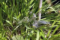 草むらに隠れる、メタルカマキリ