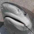 サメにおそわれるのはいつだって男性。その理由は?