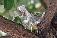 木の枝にとまっている、「メタルカマキリ」