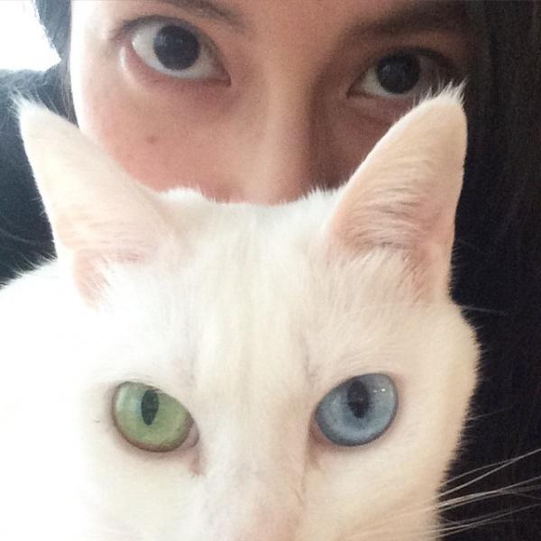 """[画像] 【エンタがビタミン♪】柴咲コウと愛猫が瓜二つ。ツーショット公開で""""素敵な瞳に吸い込まれそう""""!"""