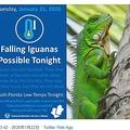 米マイアミで異例の天気予報 「冷え込みでイグアナ落ちてくる可能性」