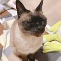 これは至高…見事な「撫で待ち顔」をする猫に悶絶する人続出