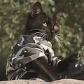 ネコがゾンビから子ネコを救出するムービー YouTubeで1億回以上再生される