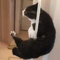 お風呂場から逃げだす猫 手すりをすり抜け颯爽と去る姿が話題に