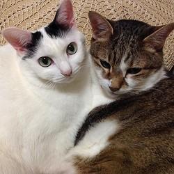 先住猫のリクくん(右)は、いつも寄り添ってくれた