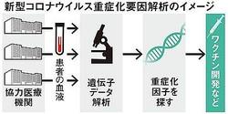 新型コロナ重症化を遺伝子レベルで解明へ 慶大など