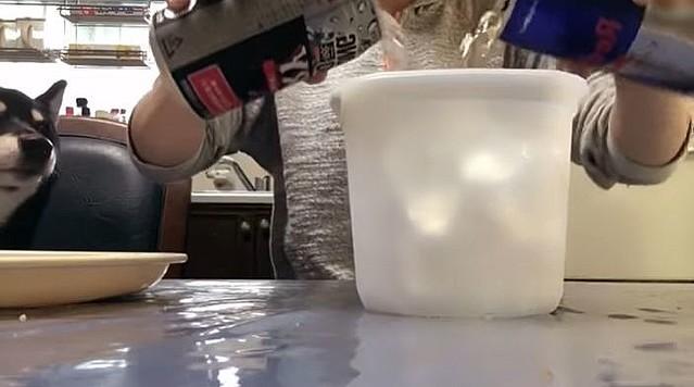 にゃん たこ t シャツ