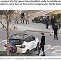 マンション上階から投げ捨てられた犬(画像は『news.com.au 2020年2月1日付「Dogs and cats thrown from apartments in China over virus spread fears」(Picture: AsiaWire/Australscope)』のスクリーンショット)