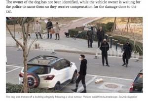 [画像] 【海外発!Breaking News】「ペットがウイルスを拡散」中国で虚偽報道 建物上階から犬や猫が投げ捨てられる