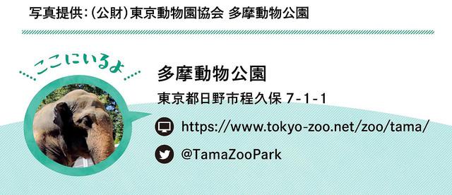写真提供:(公財)東京動物園協会 多摩動物公園