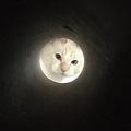「亡き師匠を偲んで見上げた夜空」工夫して猫を撮影も想像と違う写真に
