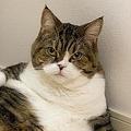猫界の西田敏行!くつろぎすぎるまめすけくんの貫禄がすごい