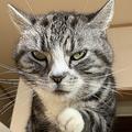 「話の途中なんすけど…」誘いを断られ複雑な表情の猫
