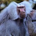 サルの研究で判明した「男女の友情」のメリットとは?