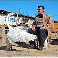 今ではほとんどの時間を一緒に過ごす白鳥と男性(画像は『Metro 2021年2月9日付「Man is best friends with swan he rescued 37 years ago」(Picture: AP)』のスクリーンショット)