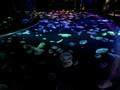 アクリルなしで直接クラゲを見下ろせる水槽 すみだ水族館の新エリア