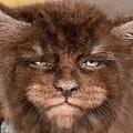 """ブリーダーご自慢の「人間のような顔を持つネコ」に批判の声も(画像は『Татьяна Расторгуева 2019年10月1日付Instagram「Catsvill County Werwolf Black litter """"W"""" from 25.07.2019」』のスクリーンショット)"""