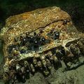 ドイツ北部沖のバルト海の海底で見つかったナチス・ドイツの暗号機「エニグマ」。世界自然保護基金(WWF)提供(2020年11月11日撮影、同年12月4日提供)。(c)AFP PHOTO / WWF / SUBMARIS / Florian Huber