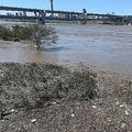 荒川の激流に恐怖 整備の重要性