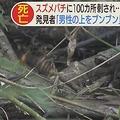 畑を見に山へ 86歳の男性がスズメバチに100カ所を刺されて死亡